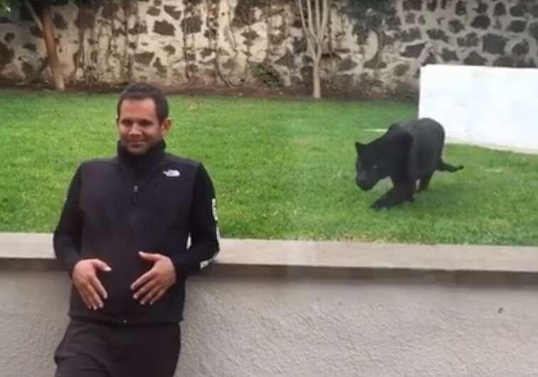 Vídeo flagra jaguar correndo para dar o bote em homem desatento