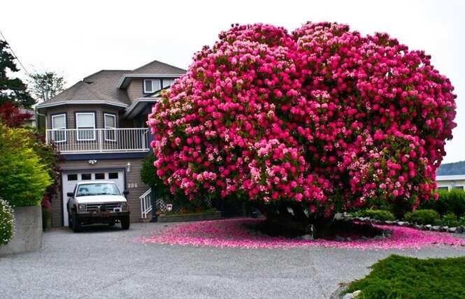 Fotos de árvores fabulosas