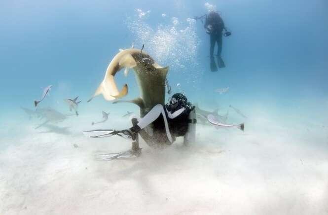 Biólogo ensina como sobreviver a um ataque de tubarão