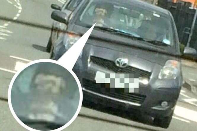 Imagem inacreditável mostra cão dirigindo veículo