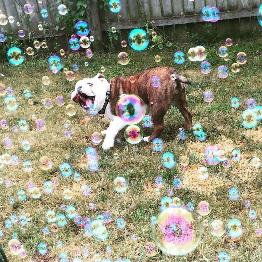 Foto mostrando o que seria o cão mais feliz do mundo bomba na internet