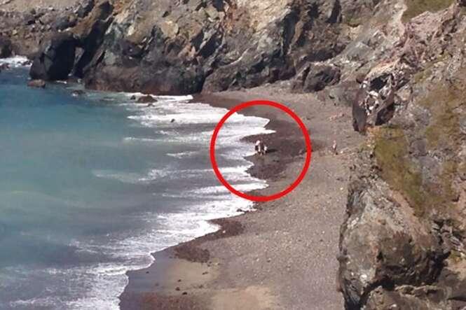 Turista devolve ao mar tubarão encalhado em praia