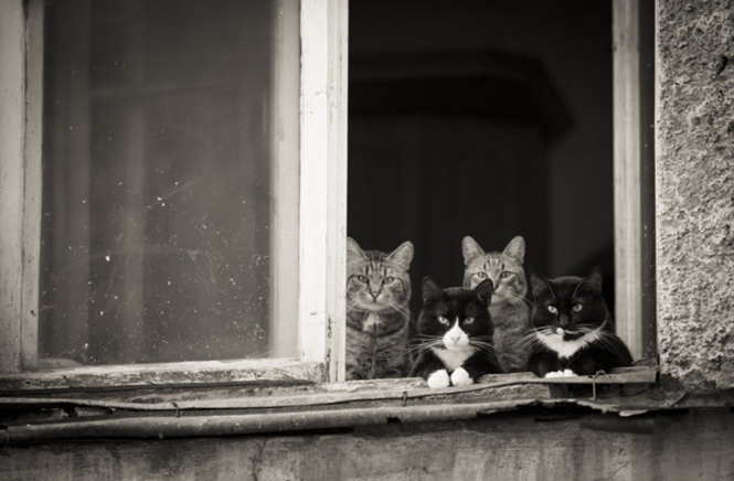 Foto: Olesya Mishkina