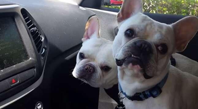 """Reação de cãezinhos ao escutarem que """"vão ao parque"""" bomba na web"""