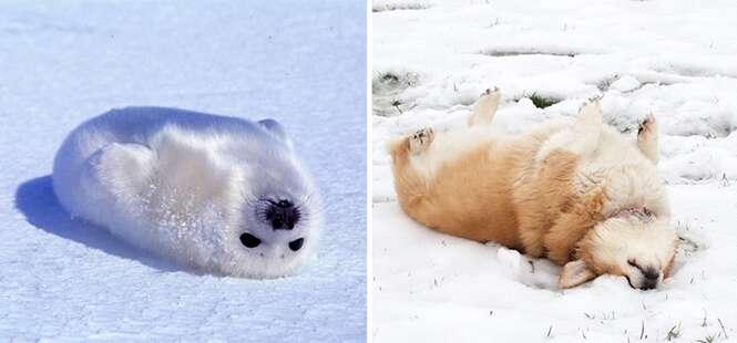 Cães que têm muito em comum com animais marinhos