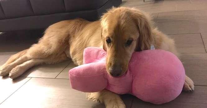 Cão com necessidades especiais é adotado por família amorosa