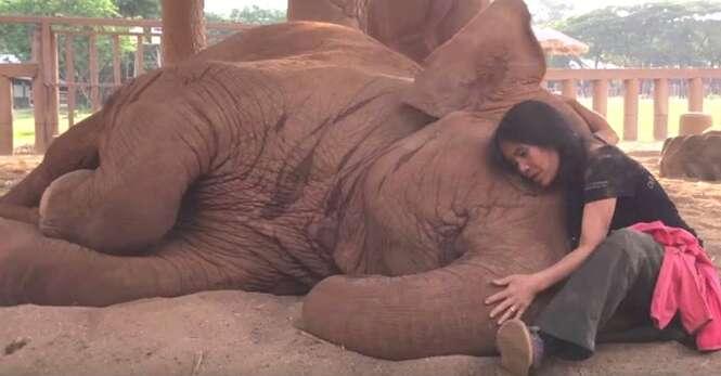 Jovem canta bela canção de ninar para elefante dormir