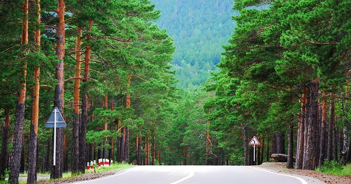 Nenhuma árvore será cortada a partir de agora na Noruega