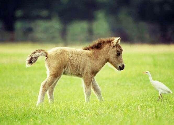 Foto: horsebreedsinfo