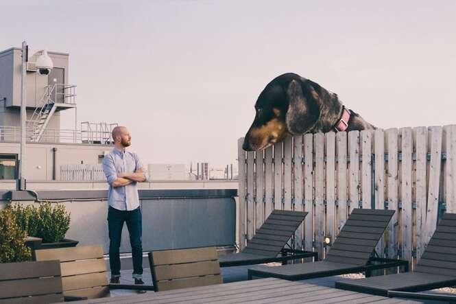 """Dono cria fotos divertidas com seu cão """"gigante"""""""
