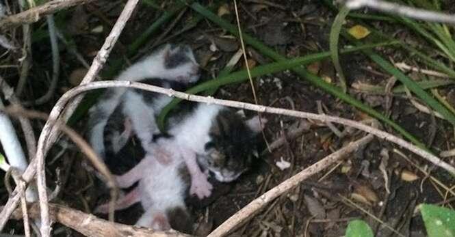 Gatinhos são encontrados desnutridos após mãe abandoná-los