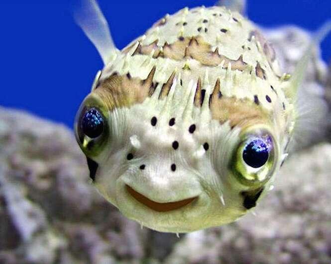 Fotos dos animais mais felizes do mundo
