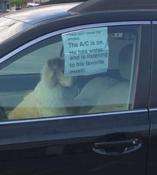 Cão é deixado sozinho dentro de carro