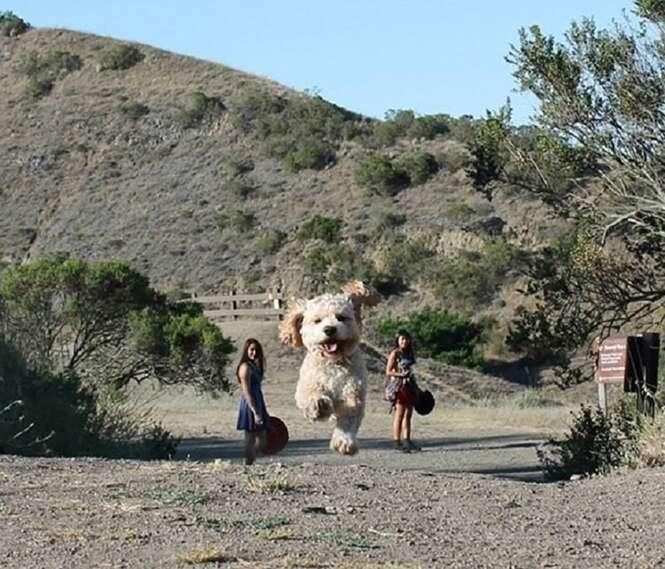 Fotos perfeitamente cronometradas que transformaram cães em gigantes