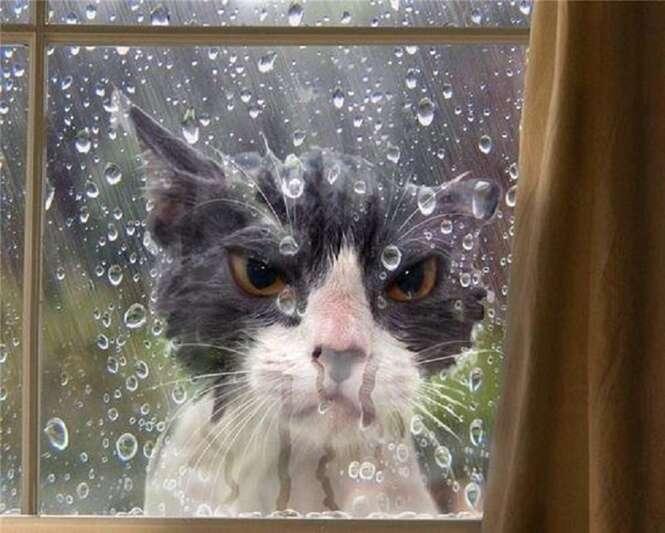 Fotos curiosas de gatos