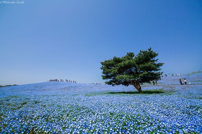 Foto: Hidenobu Suzuki