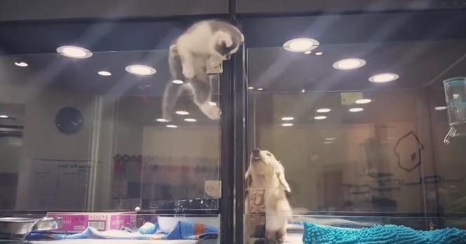 Gatinho escapa de vitrine em loja de animais para ficar perto de cão à venda