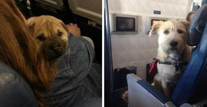 Cães que amam viajar de avião