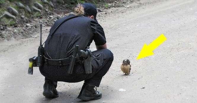 Corajosa coruja filhote bloqueia passagem de viatura policial