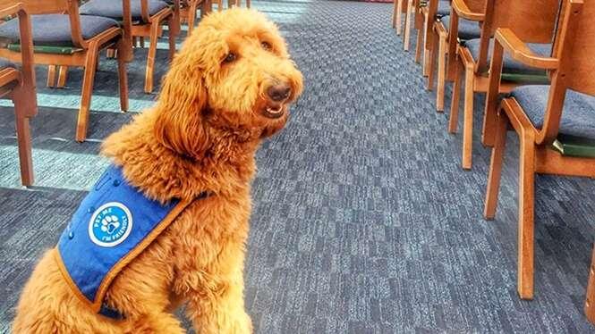 """Cão de funerária faz """"terapia"""" para ajudar pessoas enlutadas a superar perda"""