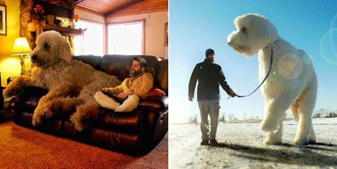 Homem faz seu cão se tornar gigante e imagens bombam na internet