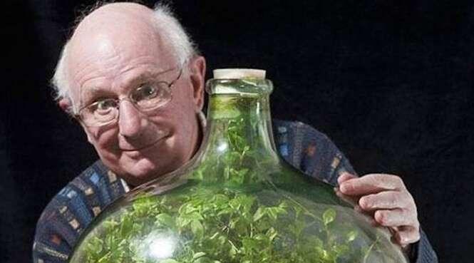Esse jardim selado numa garrafa se mantém vivo há mais de 40 anos