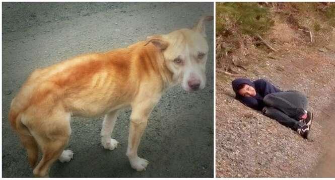 Esse cão tinha medo de humanos, até que uma menina teve a melhor ideia possível...
