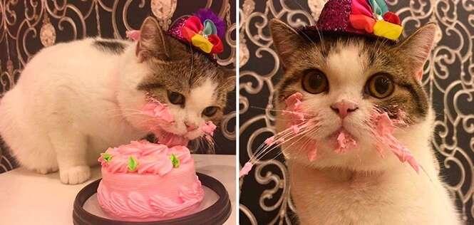 Gatinho comendo seu bolo de aniversário será a coisa mais fofa que você vai ver hoje