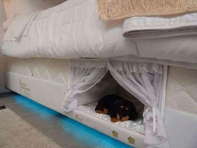 """Empresa de colchão faz """"cama beliche"""" para pessoas dormirem perto de seus animais de estimação"""