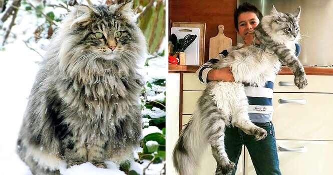 Gatos gigantes que te farão parecer um anão