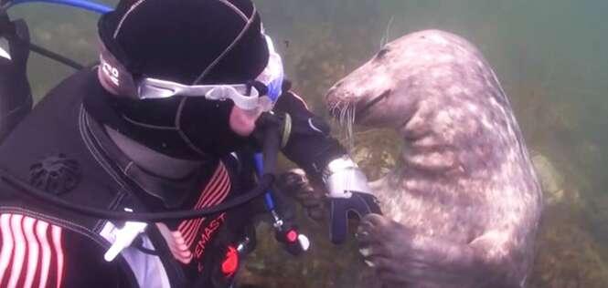 Foca reage como um cãozinho ao pedir carinho para mergulhador