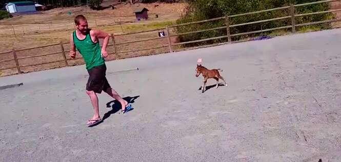 Conheça o menor cavalo que você já viu: e ele vai te perseguir!