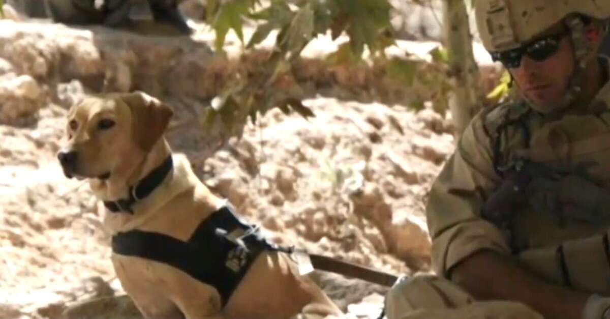 Cadela que protegeu soldado durante guerra se reúne com militar após vários anos