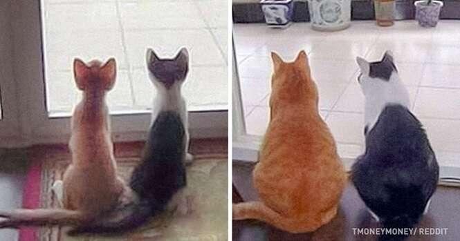Gatos que não notaram o passar dos anos