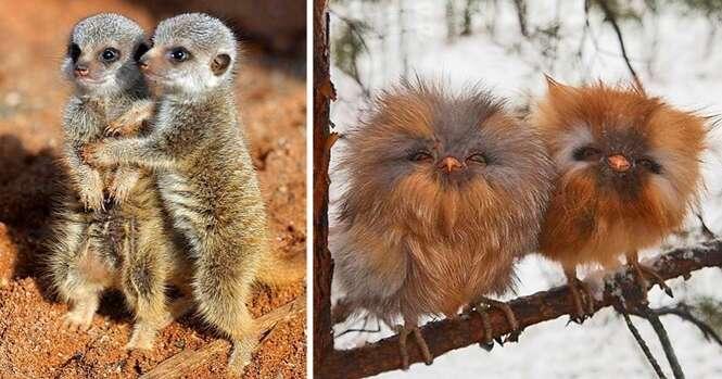 Irmãos mais fofos do mundo animal