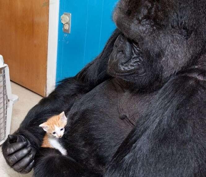 A história da mamãe gorila que adotou gatinhos