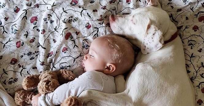 Série de fotos de cão e bebê dormindo juntos vai derreter seu coração