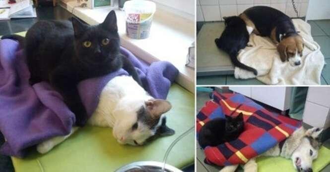 """Gato """"enfermeiro"""" cuida de animais em abrigo"""