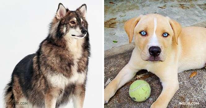 Resultados inacreditáveis de cruzamentos de cães