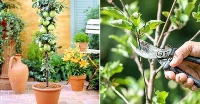 Como cultivar frutas na varanda de casa