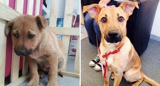 Animais antes e depois de serem adotados