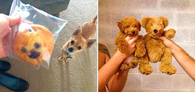 Cães que parecem demais com outras coisas