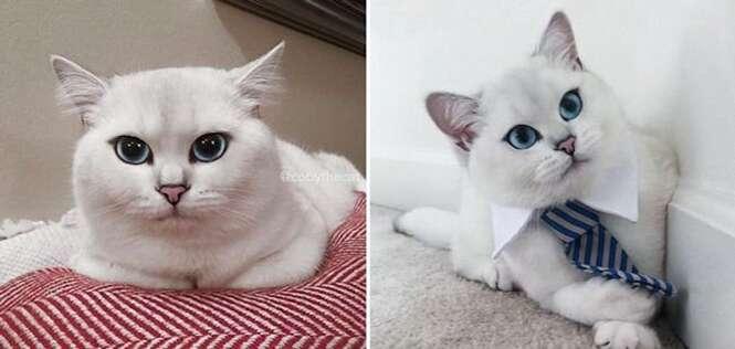 """Conheça o gatinho fofo que vem causando inveja na internet por possui um """"delineado"""" perfeito"""