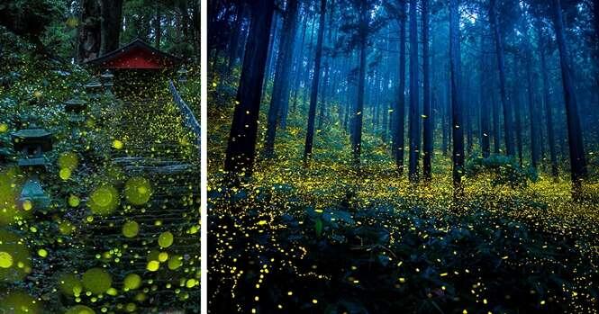 Imagens espetaculares de vaga-lumes no verão japonês vão te fascinar