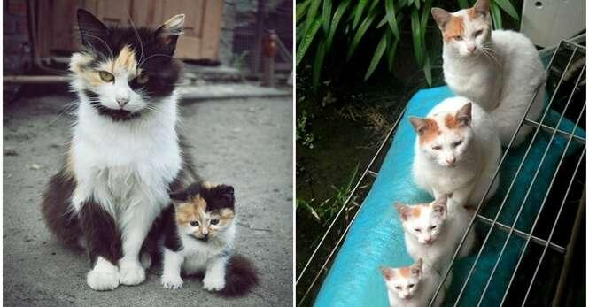 Fotos fofas de gatos com seus lindos filhotes