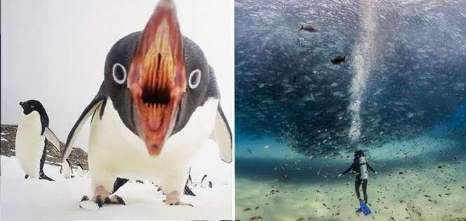 Fotos da natureza que ganharam o prêmio de melhores do ano