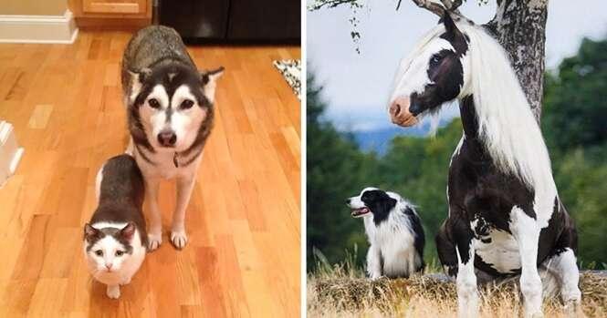 Animais que poderiam ser irmãos