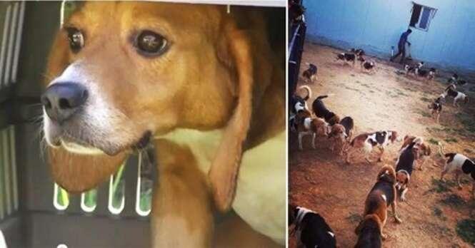 156 cães veem a luz do sol pela primeira vez após serem resgatados