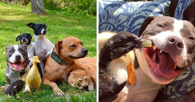 Casal salva 7 animais e é assim que eles vivem agora