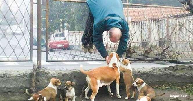 Fotos que só quem tem cão vai entender